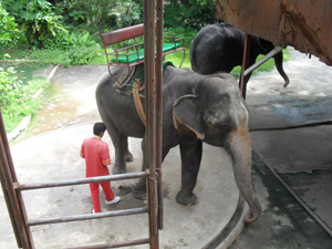 Une petite balade à dos d'éléphant à Samutprakarn